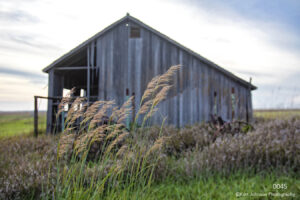 landscape barn grasses rural