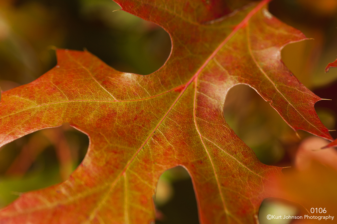 leaf closeup texture red orange