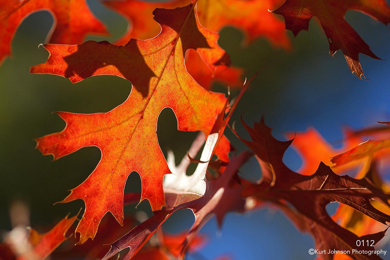 leaves texture red orange blue backlit