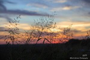 sunset grasses silhouette blue