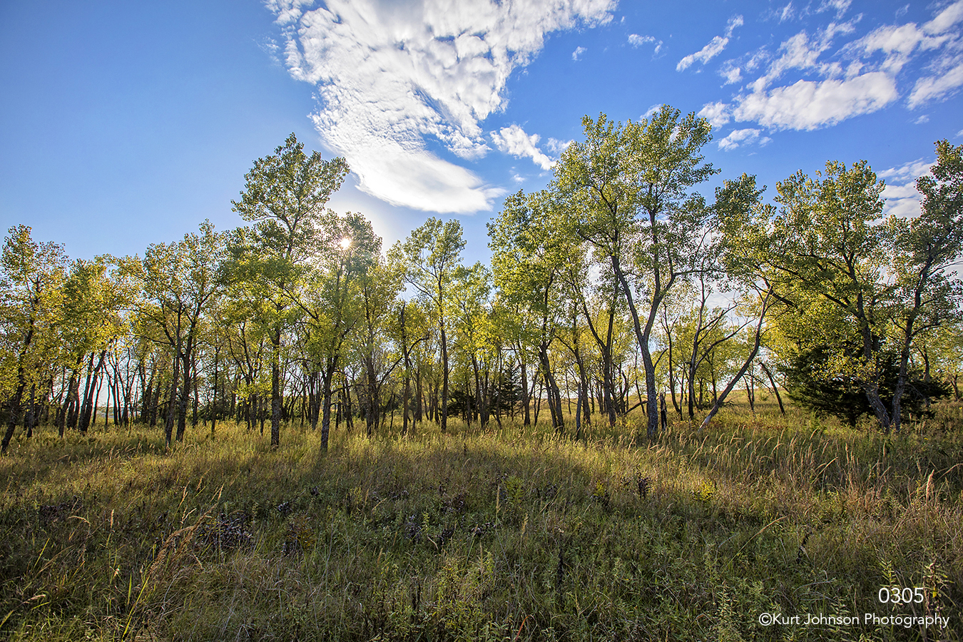 landscape trees grasses clouds green