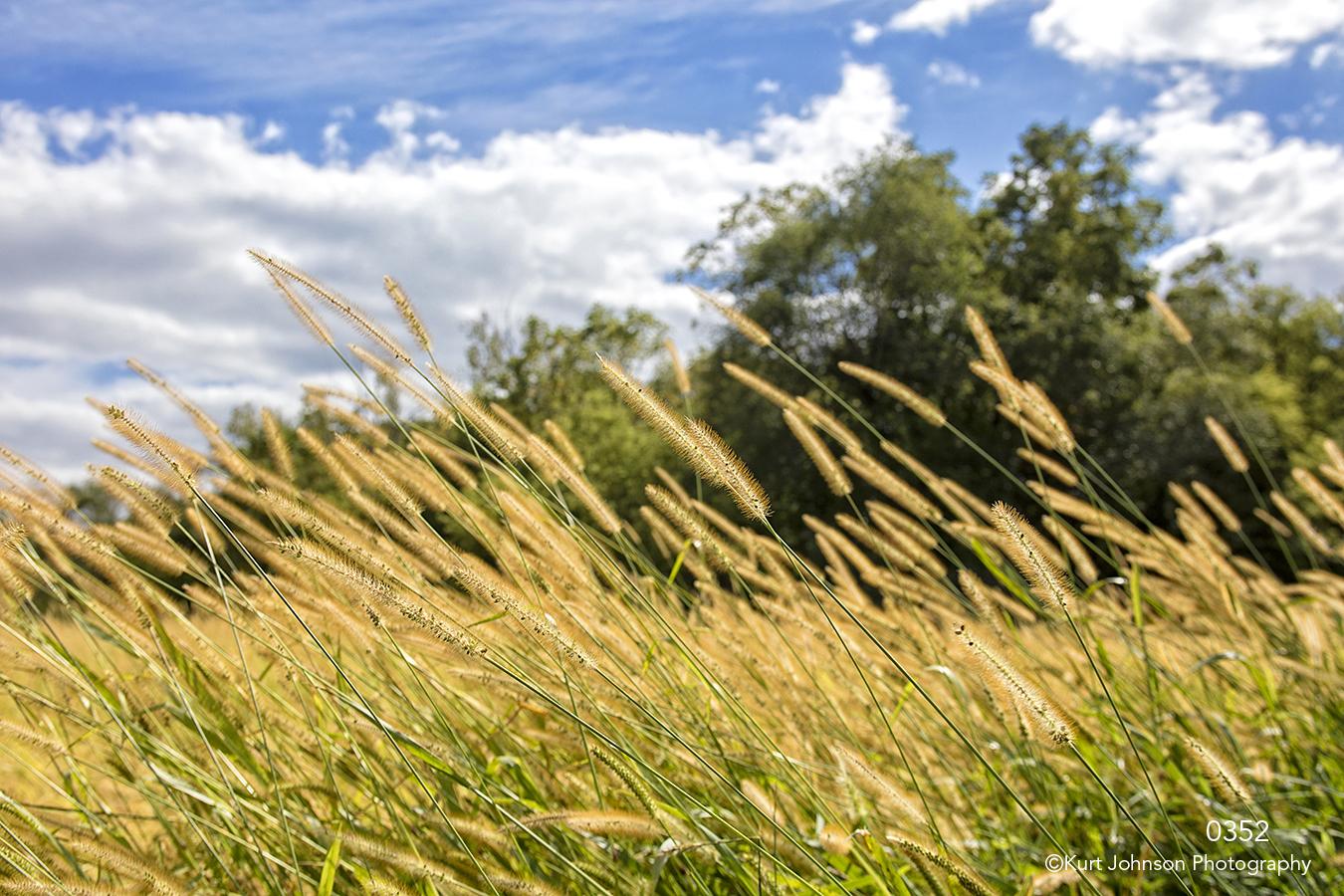Landscape grasses yellow clouds