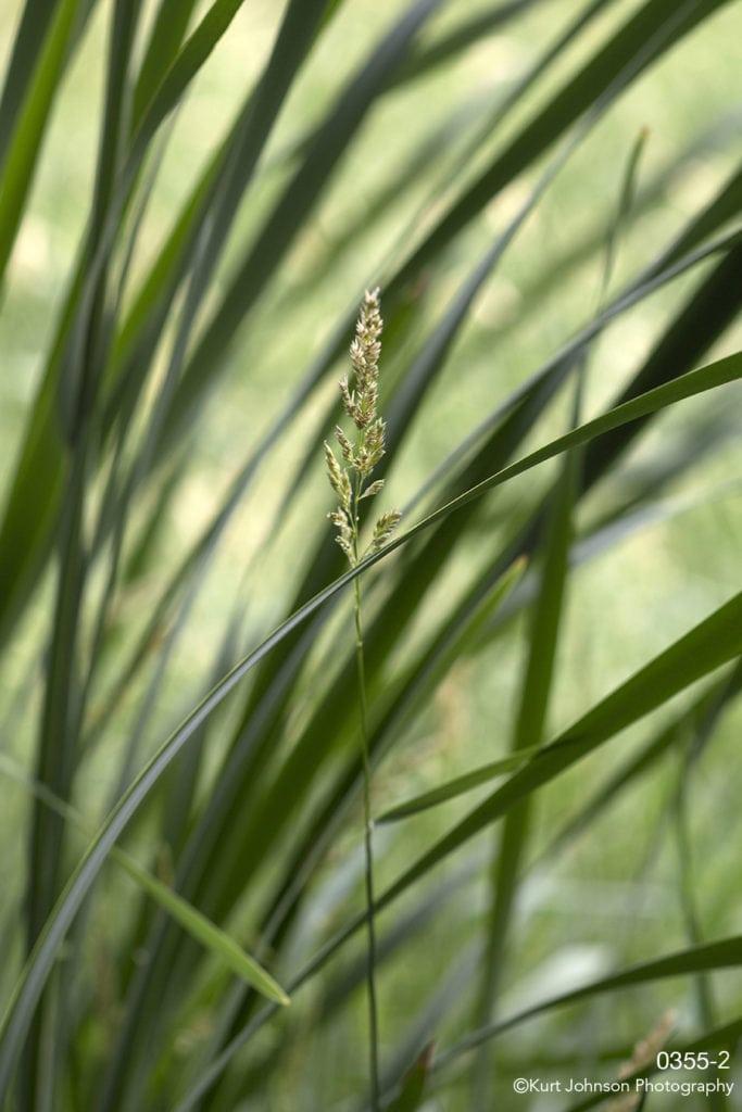 green grasses blade grass
