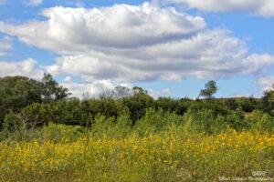 landscape flowers clouds grasses