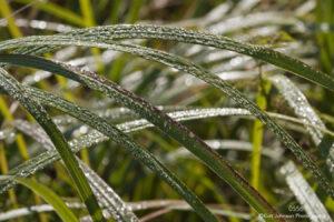 green grasses raindrops earthtone