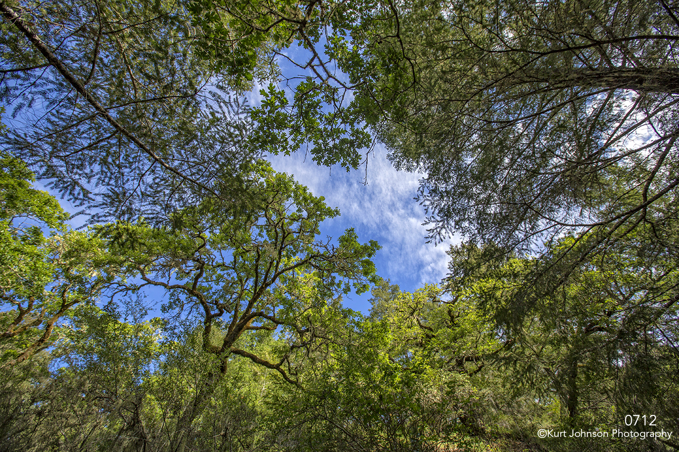 green trees sky forest lush skyscape