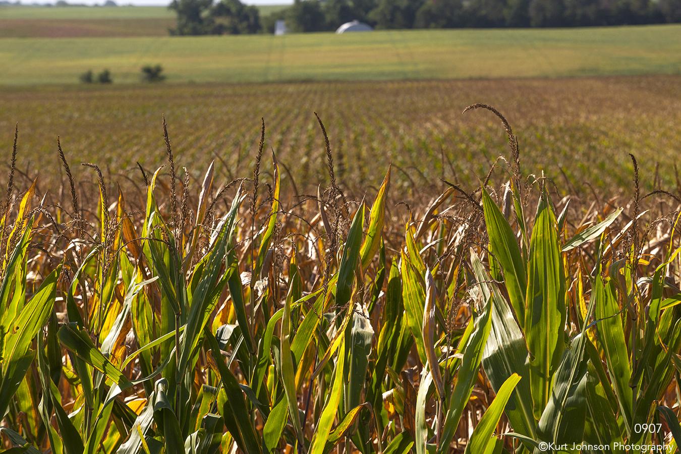 landscape corn field farm rural