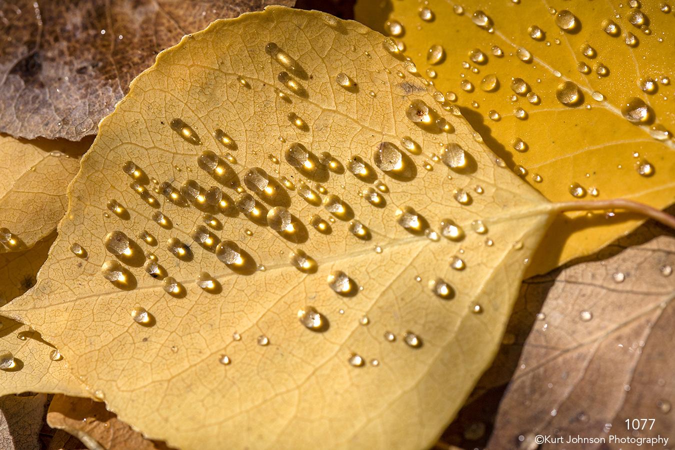 raindrops yellow leaf birch light texture