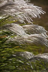green white grasses blowing earthtone