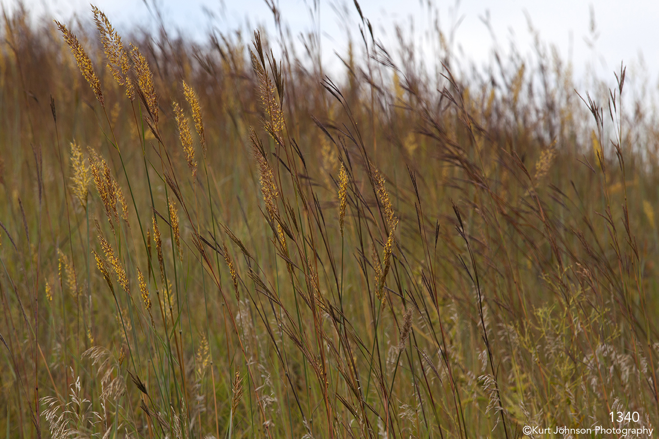 grasses blowing fall earthtones brown yellow landscape