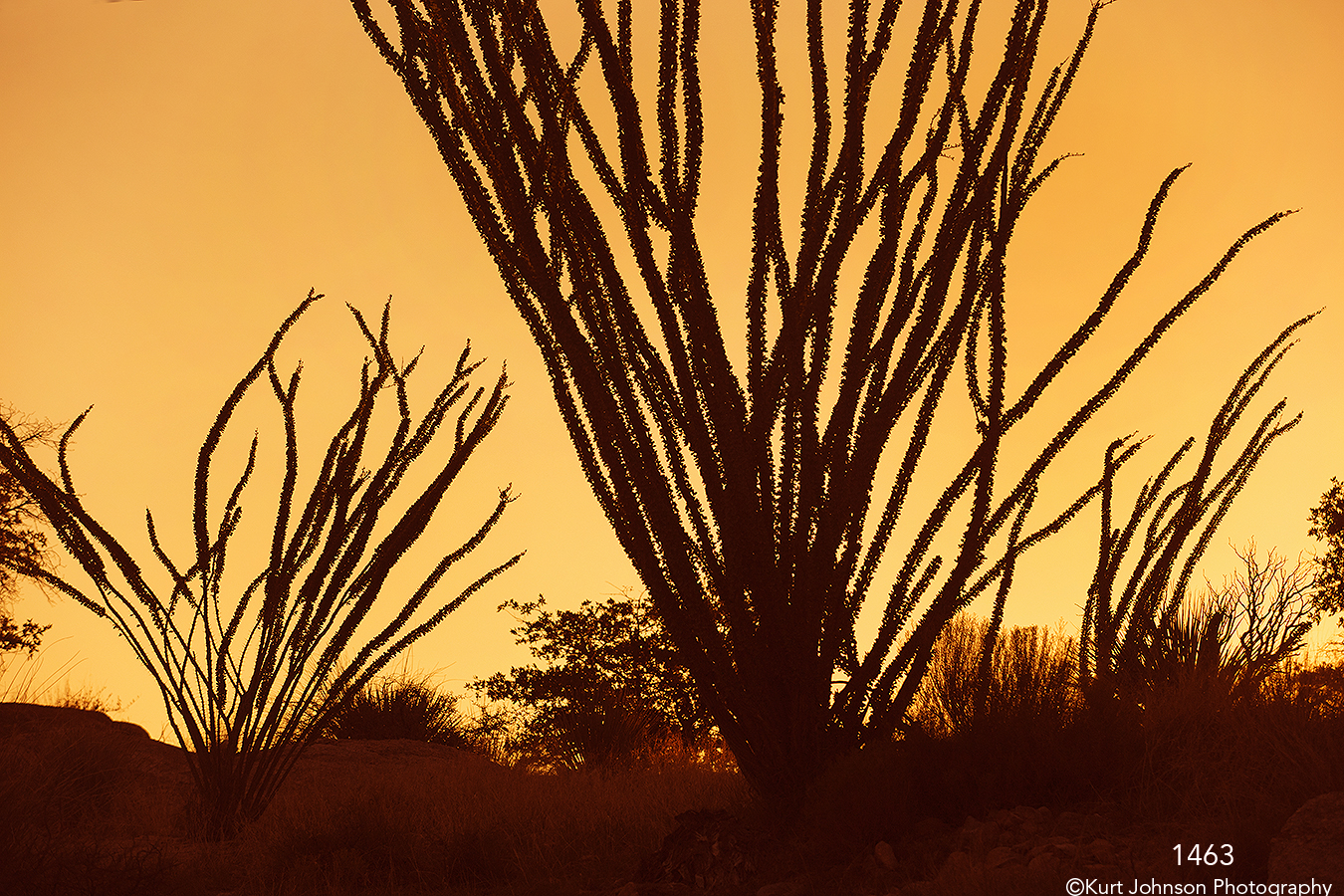 silhouette orange grasses desert sunset
