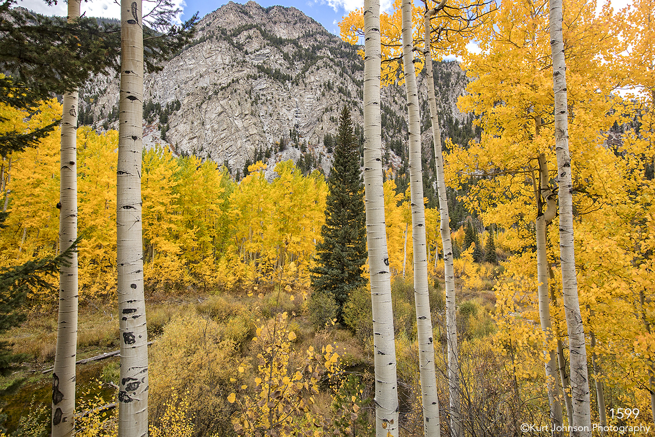landscape water trees forest fall mountains colorado