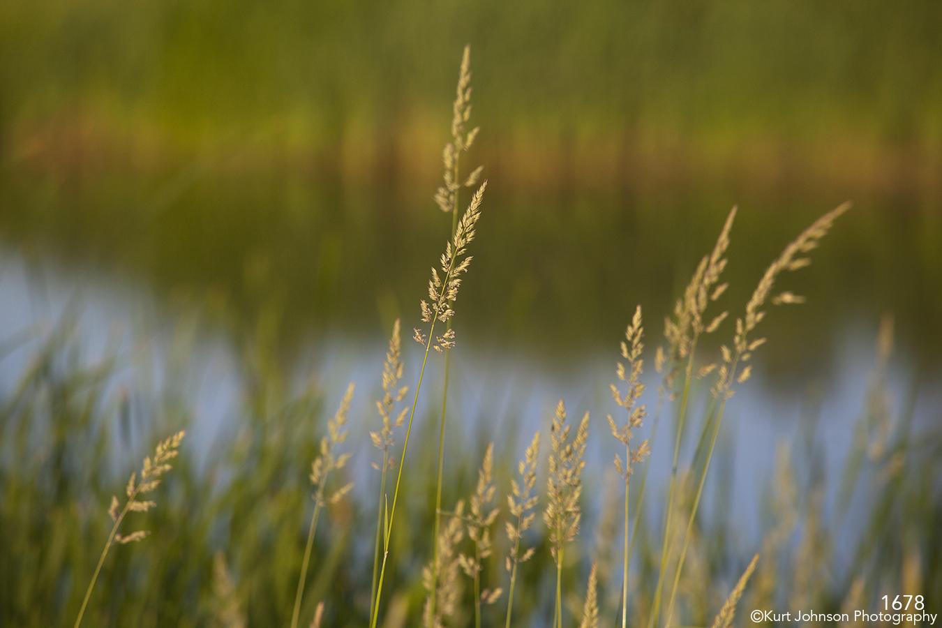 grasses green waterscape landscape