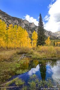 landscape pond water birch trees colorado
