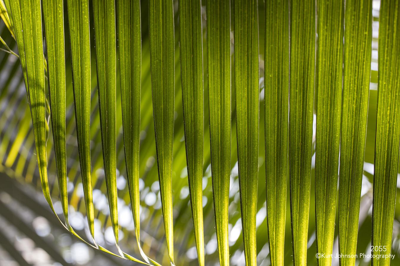 Green leaf lines plant backlit