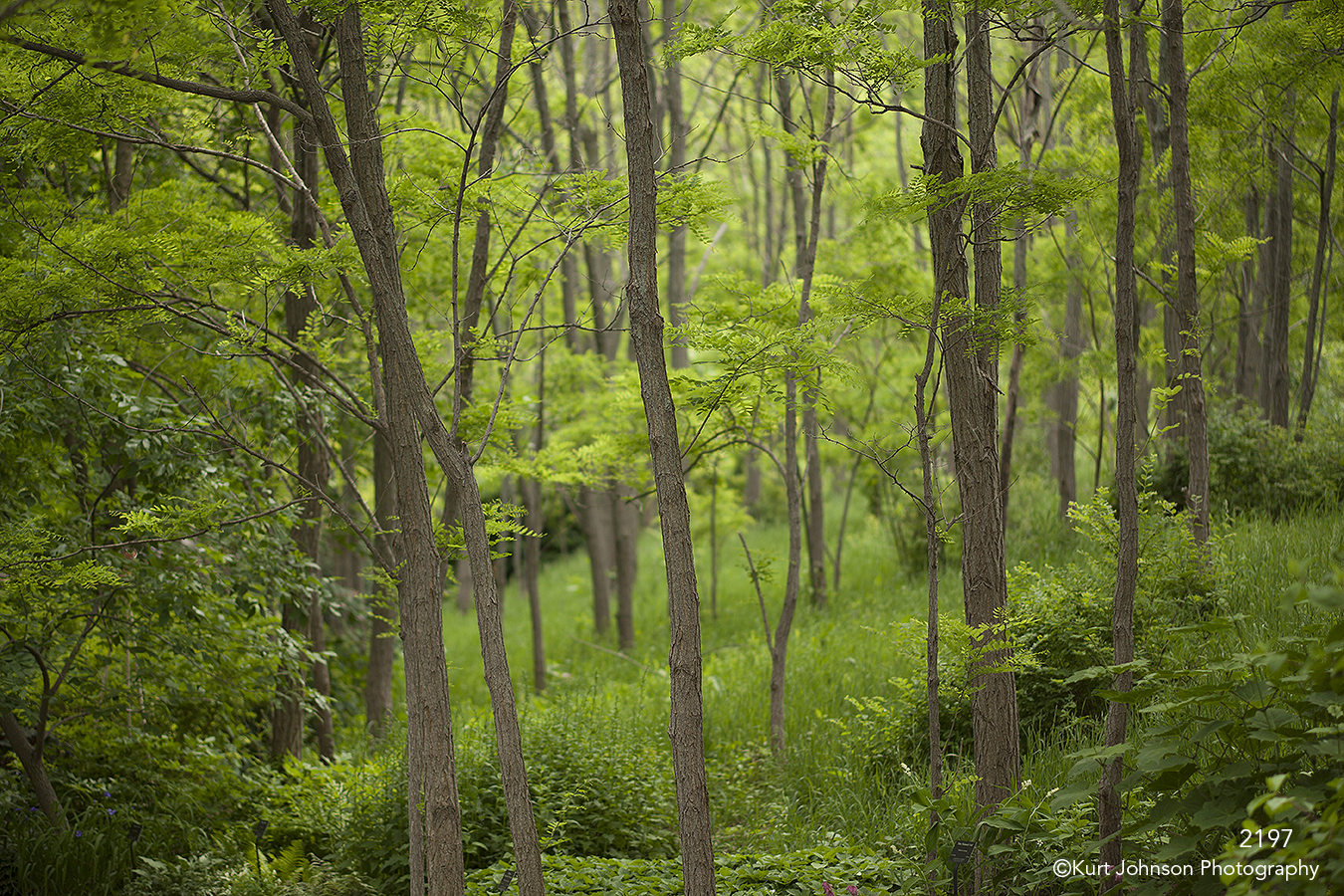 landscape forest trees green leaves