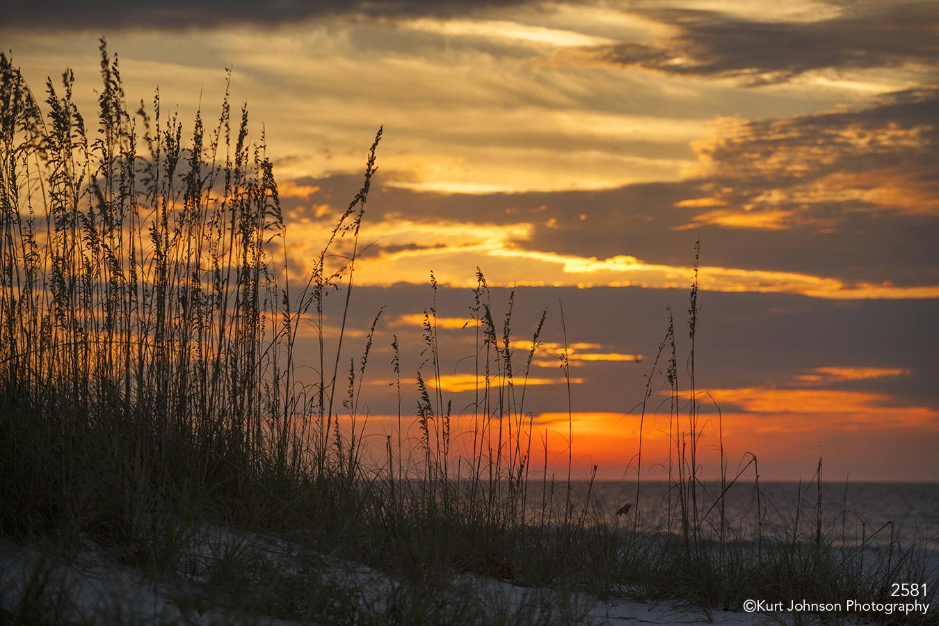 sunset landscape waterscape beach grasses