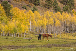 landscape birch fall horses colorado
