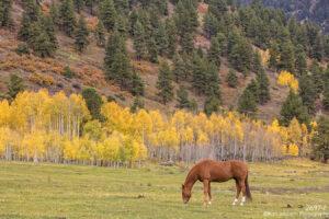 landscape colorado horse mountains trees