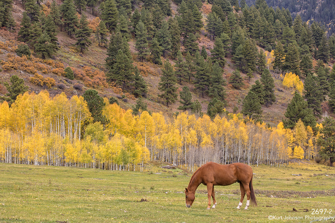 landscape colorado horse mountains trees