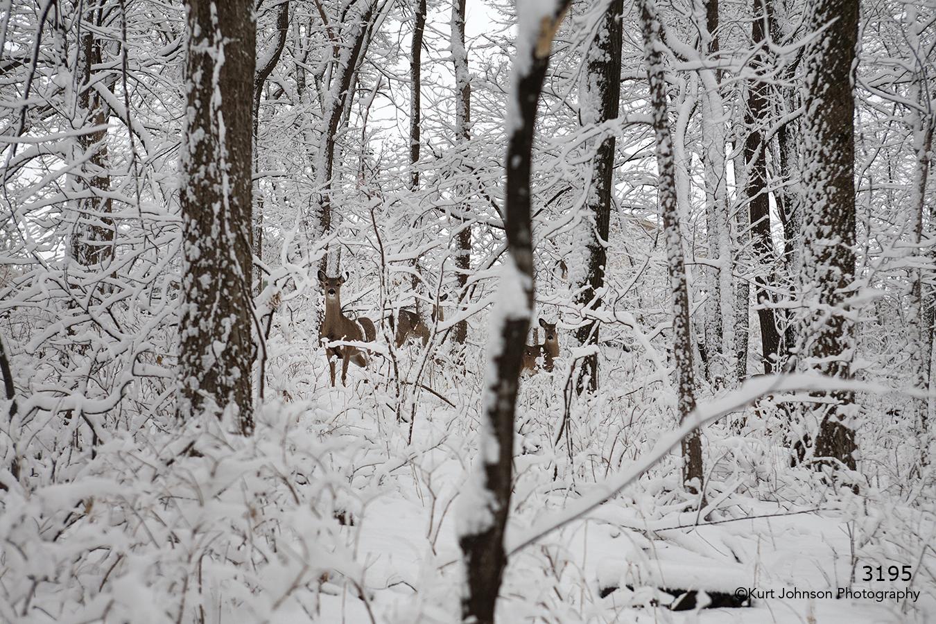landscape snow deer wildlife forest trees