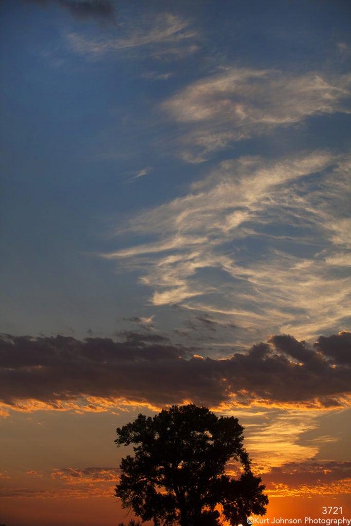 sunset tree silhouette blue orange sky