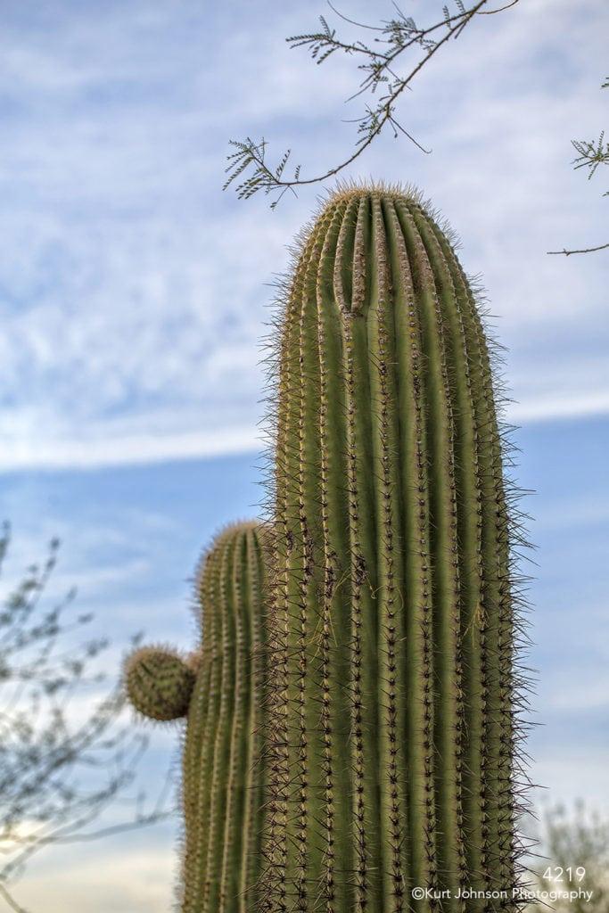 cactus green blue sky