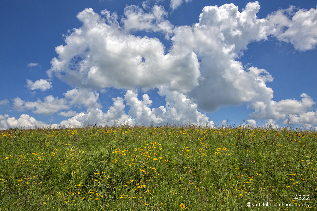 landscape fields grasses flowers green clouds