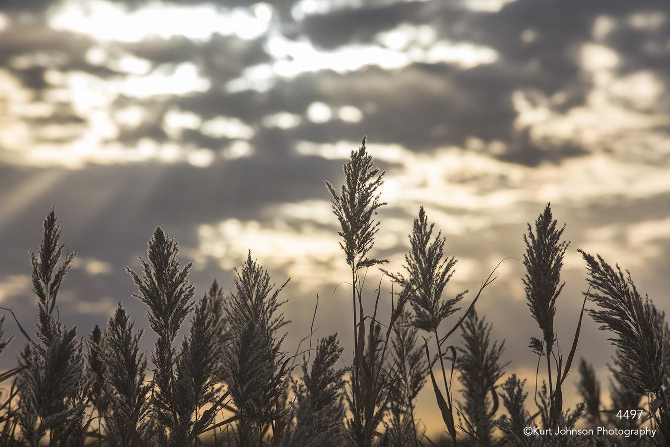 landscape grasses sunset clouds fall earthtones light
