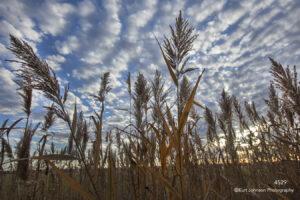 landscape grasses sunset clouds fall earthtones