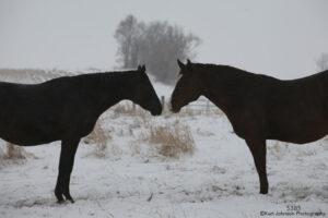 horses snow landscape Wildlife