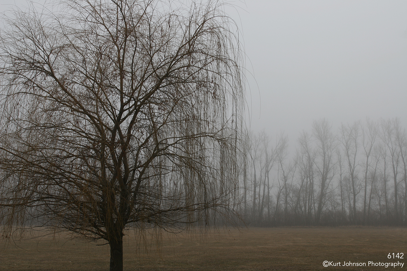 fog willow landscape bare tree