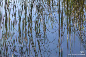 grasses water waterscape green blue