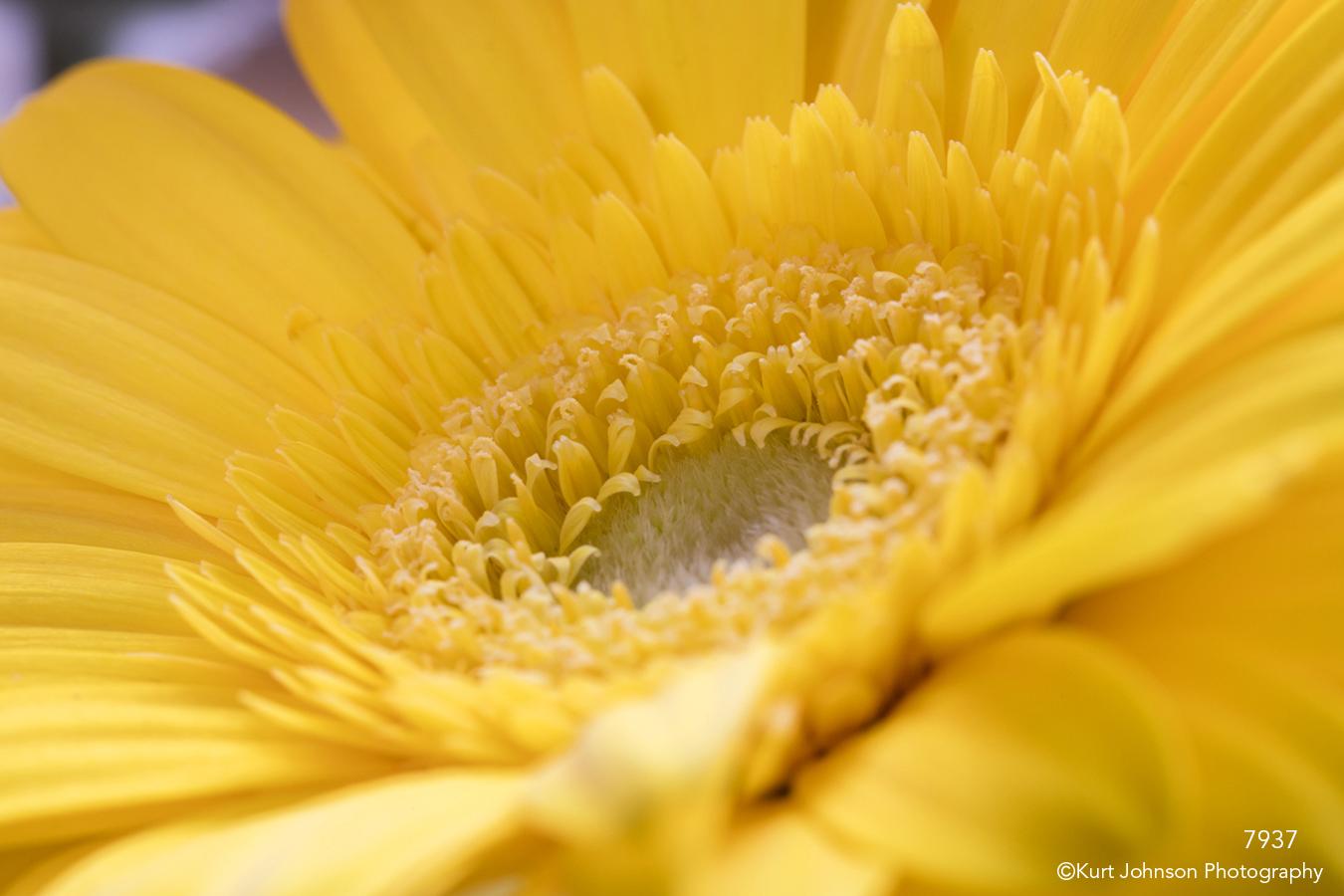 yellow flower closeup texture detail