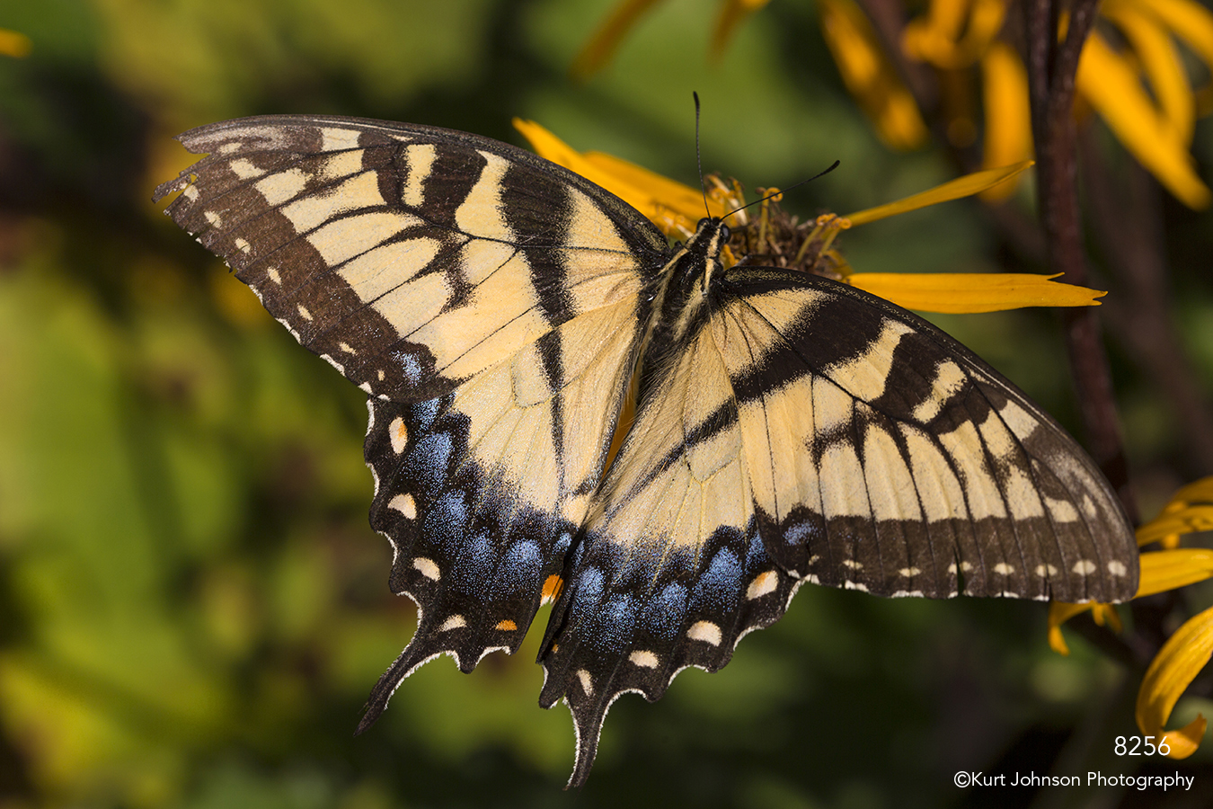butterfly animal yellow flower