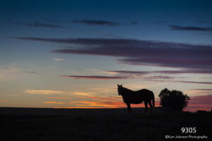 sunset wildlife horse clouds silhouette landscape