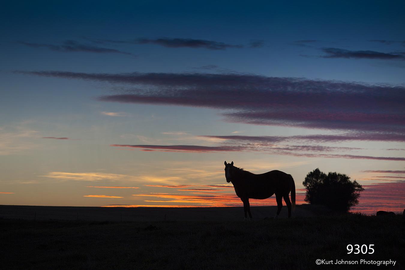 sunset wildlife horse clouds silhouette landscape