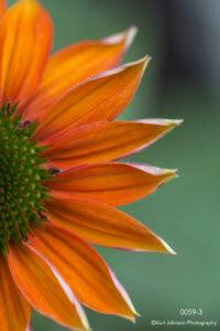 flower orange detail close up texture petals green