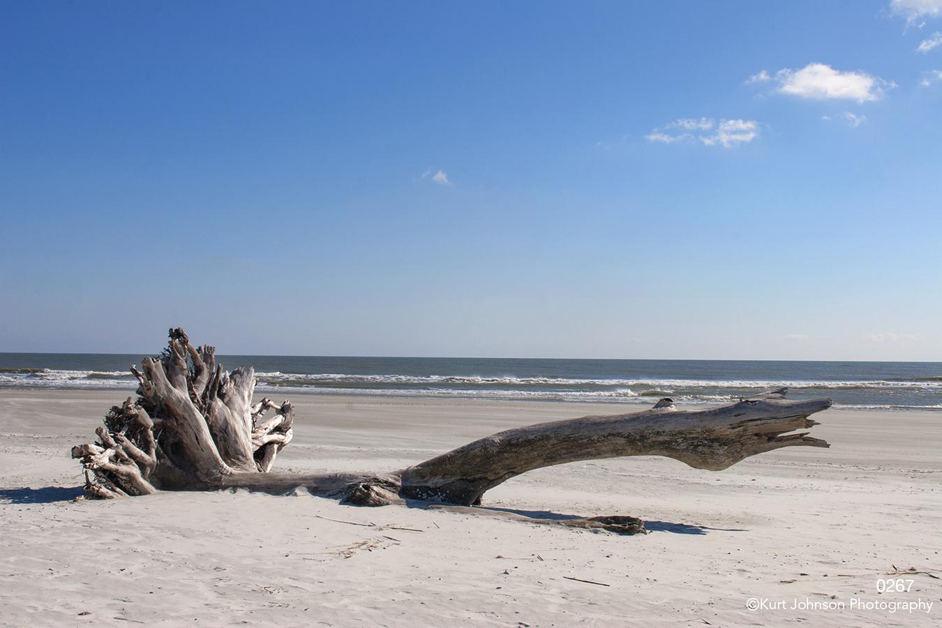 waterscape beach landscape waves sky wood driftwood