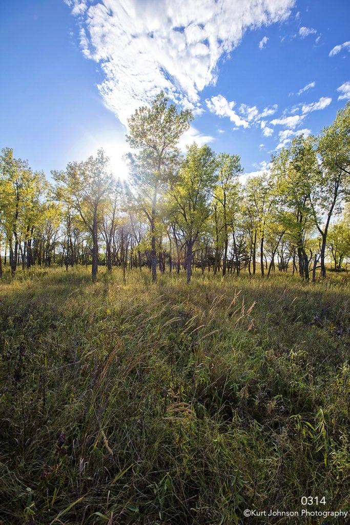 landscape grasses trees light clouds green