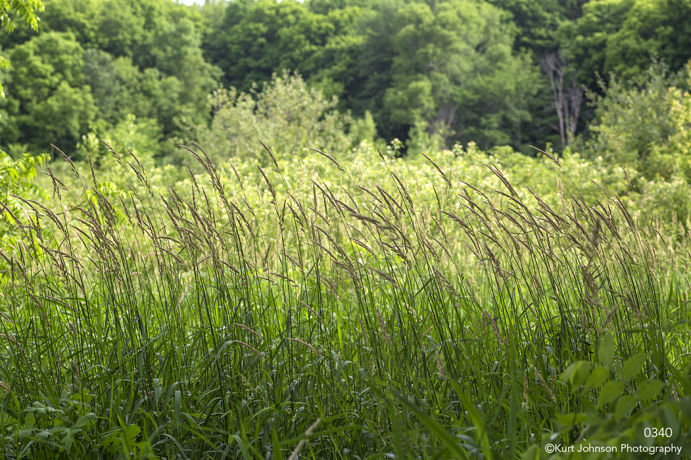 grasses green forest landscape