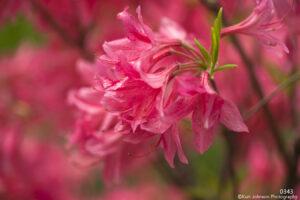 flowers pink flowering tree blooming