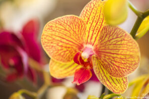 flower orchids yellow pink detail texture