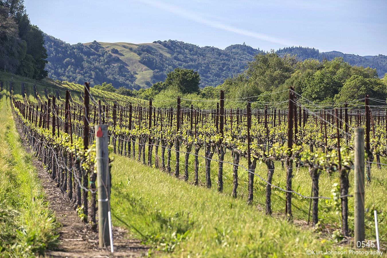 landscape mountains winery california vine