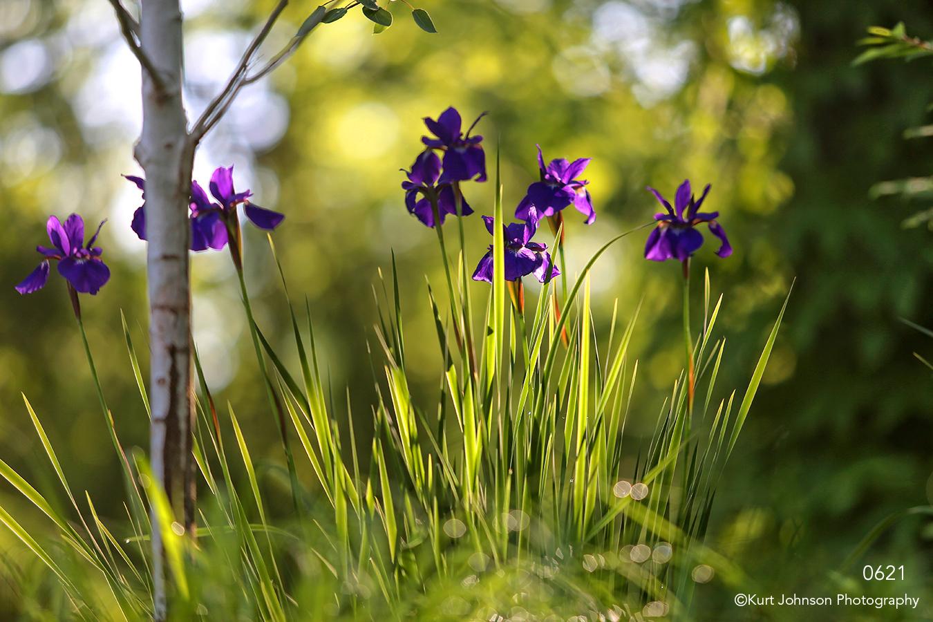 flowers grasses green iris purple forest trees