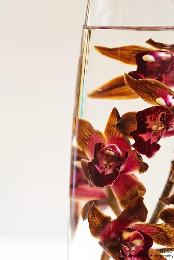 flowers orchids water flowing vase brown orange