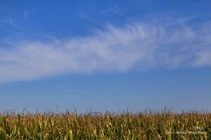 landscape corn rural crops field blue sky clouds