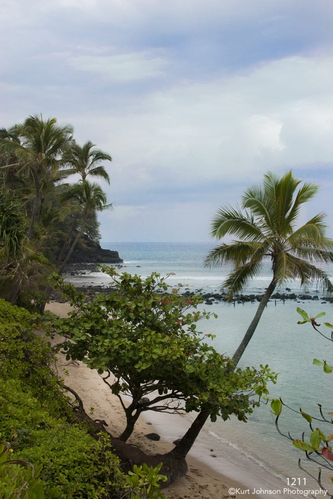waterscape landscape beach trees palm sand clouds sky hawaii shore