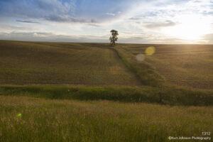 landscape grasses fields light tree
