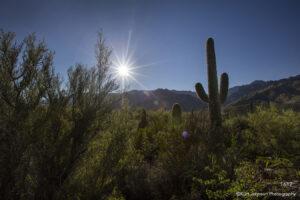 landscape desert light sun grasses cactus
